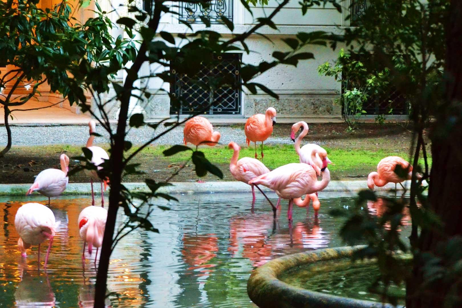 Fenicotteri rosa di Villa Invernizzi