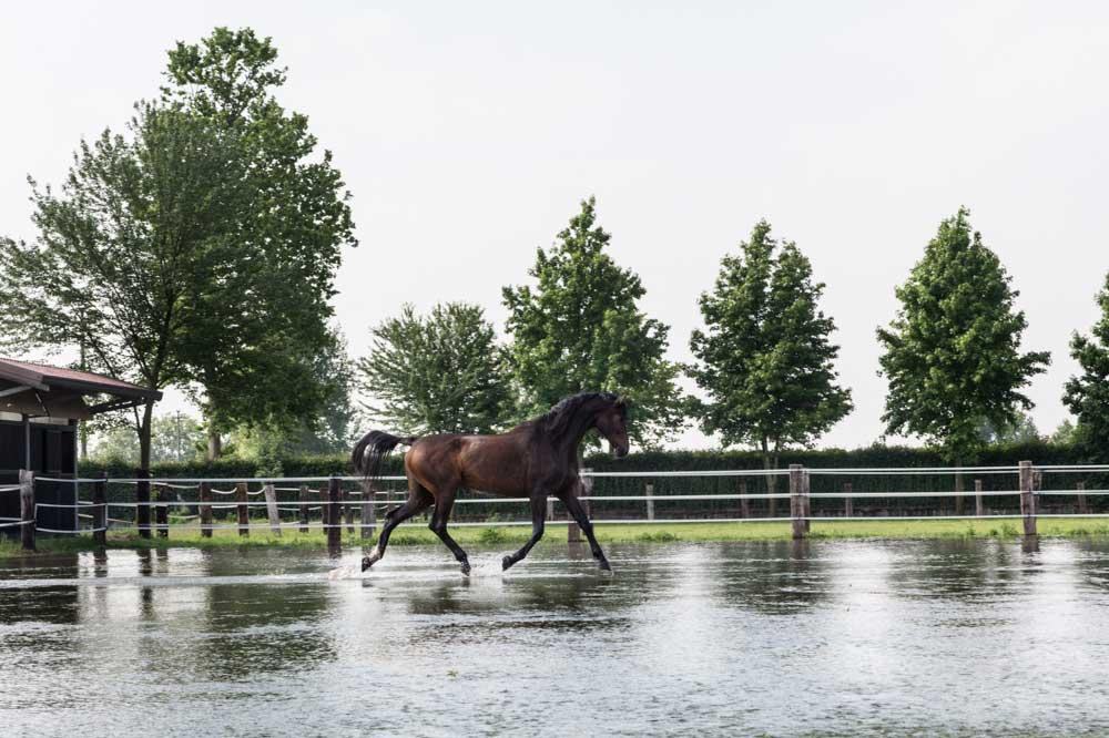 I migliori agriturismi vicino a Milano |San Giacomo Horses