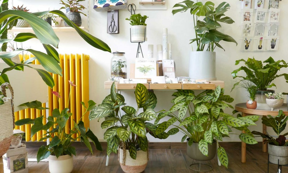 WILD – Living with plants