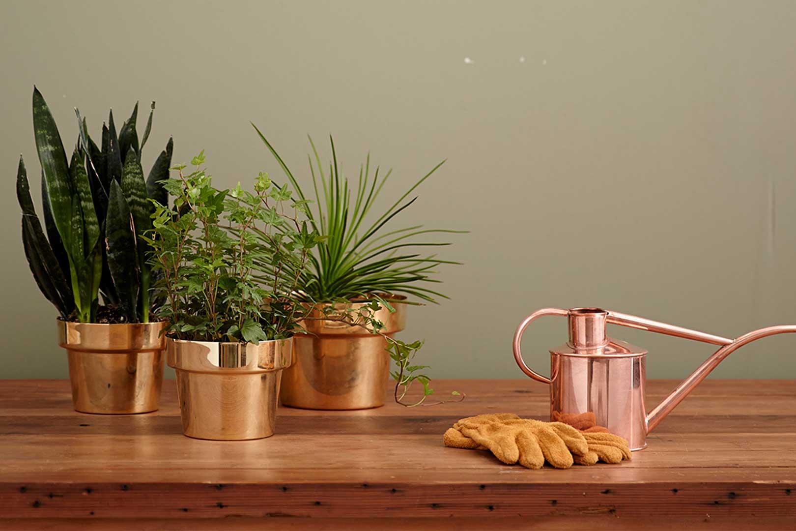 Wild Living with Plants - Milano
