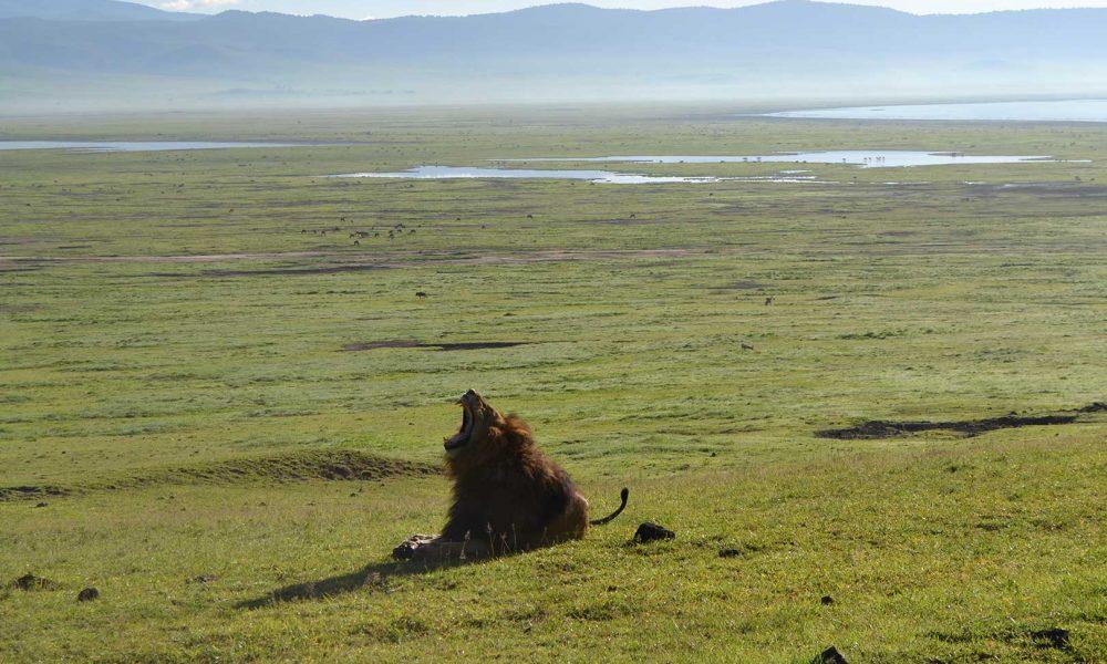 Consigli per un Safari in Tanzania in Game Drive