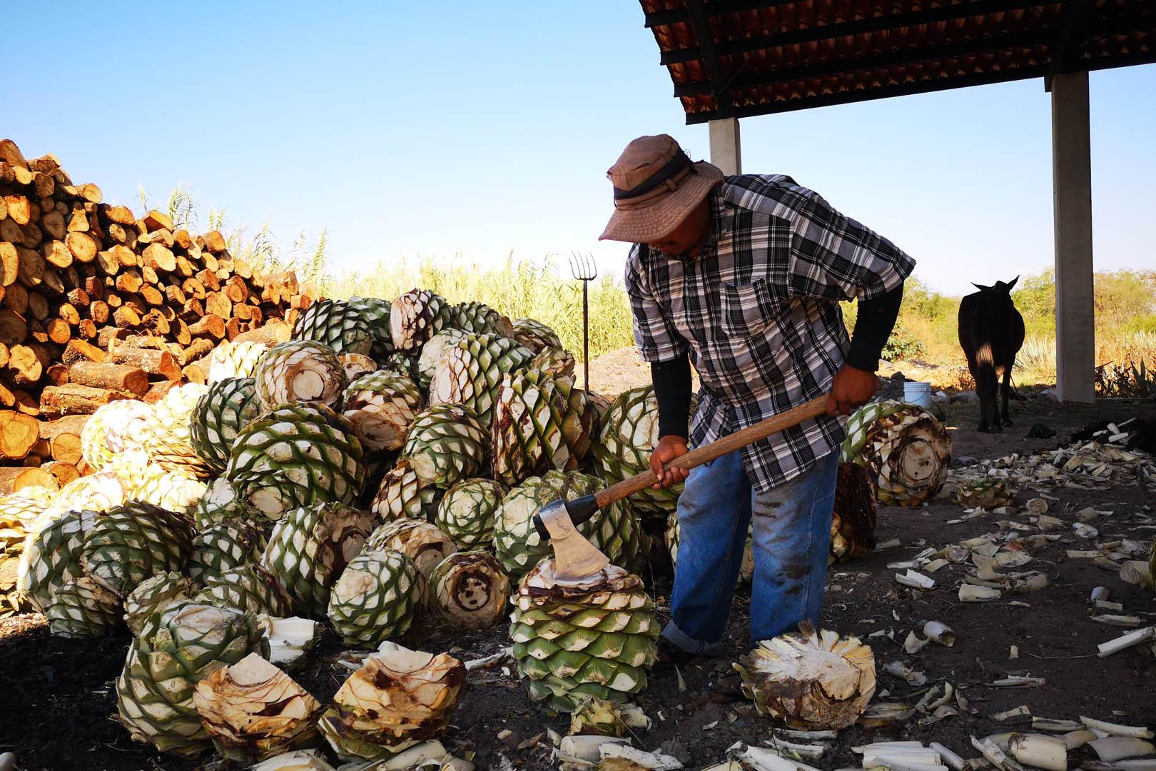Tequila o Mezcal? Tutte le Differenze e le Migliori Ricette da Provare