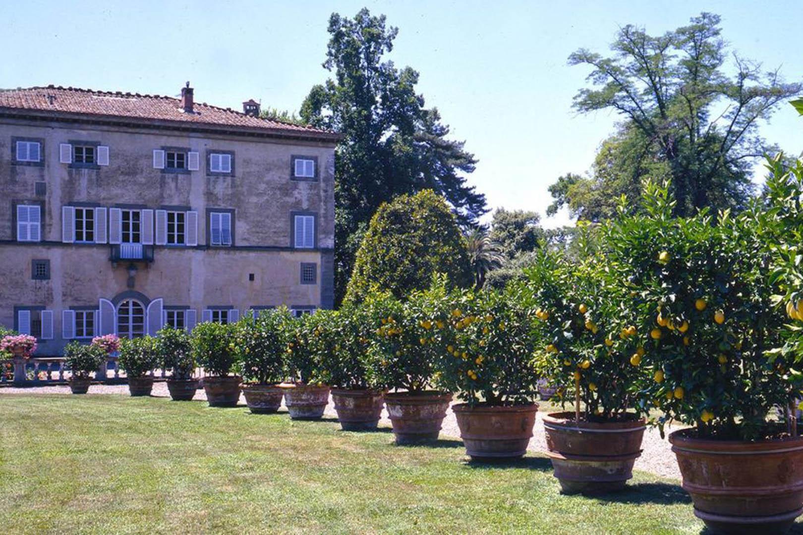 Fiori Piante Firenze